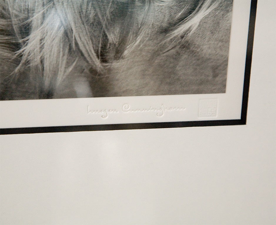 Framed Silver Print from Original Negative by Imogen Cunningham For Sale 4