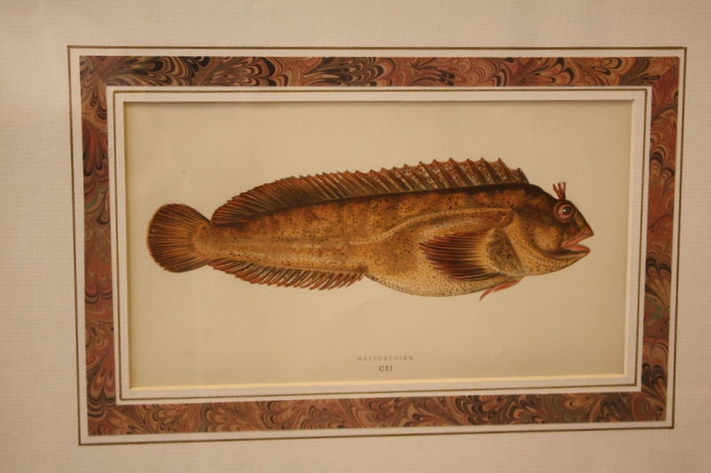 Six Exotic Fish Engravings C 1850 England Hand Colored In Excellent Condition