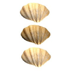 Set of 3 Wall-hanging Shell Sculptures/Sconces by Tony Duquette