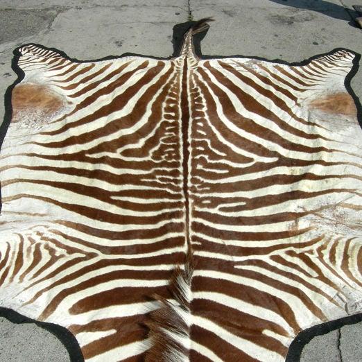 Zebra Rug Los Angeles: Mounted Zebra Hide Rug At 1stdibs