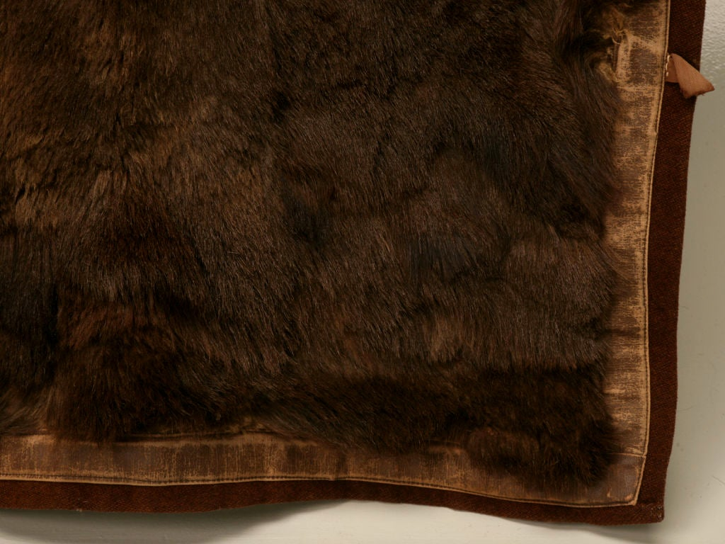 C 1900 Antique American Bear Skin Sleigh Carriage Blanket