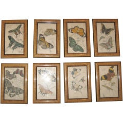 Nine 1820's Hand Colored Etchings of Butterflies