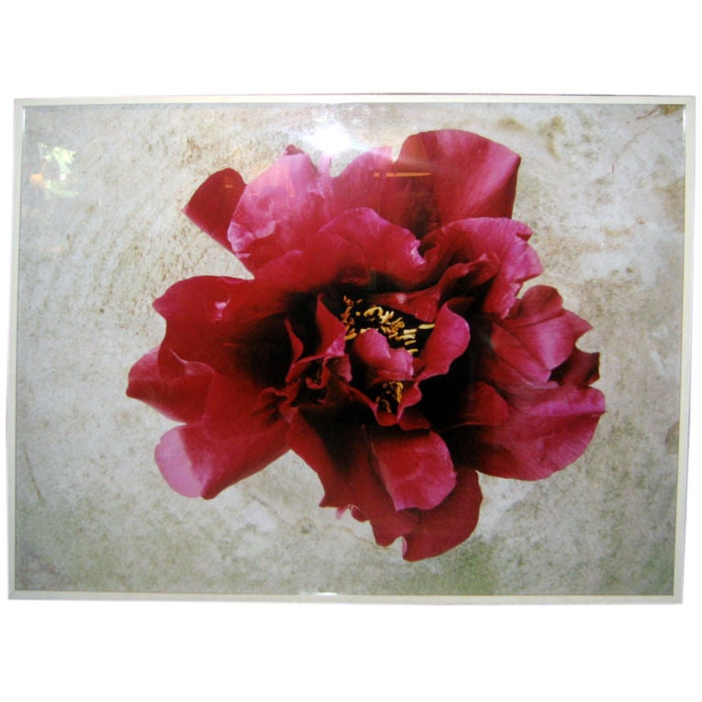 Flower Photograph by Oberto Gili For Sale