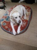 Dog Bed image 4