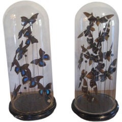 Domed Collection of Bees & Butterflies