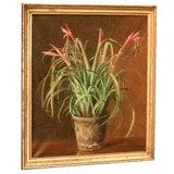 Still Life-Flowering Bromeliad