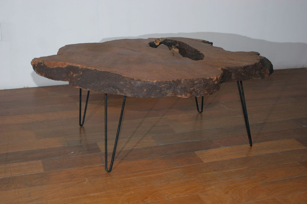 Burl Coffee Table With Hairpin Iron Legs At 1stdibs
