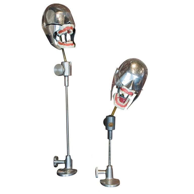 Dental School Phantom Teaching Head c. 1950's