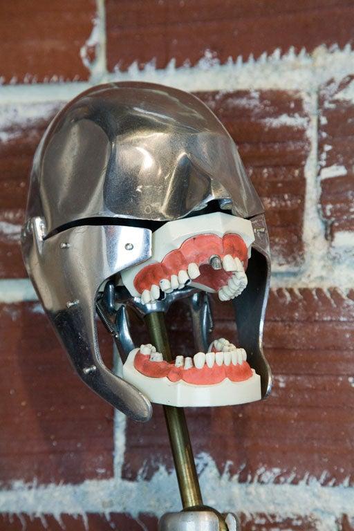Dental School Phantom Teaching Head For Sale At 1stdibs