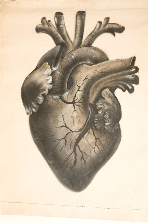Collection of Painted Human Heart Studies at 1stdibs