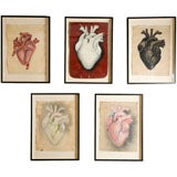 Collection of Painted Human Heart Studies