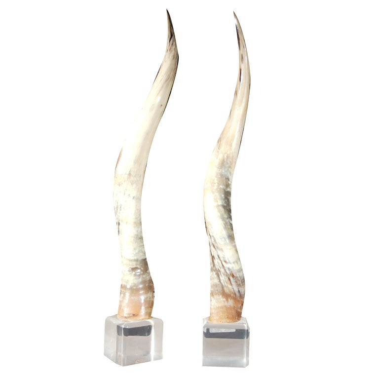 Polished Steerhorns Mounted on Lucite Blocks
