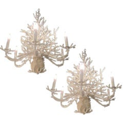 Pair of Coral Chandeliers and 4 Sconces