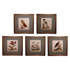 A Well-Executed Set of Hand-Colored Bird Engravings by George Edwards