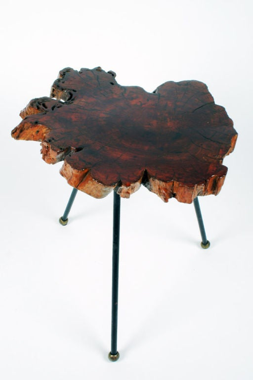 Organic Cypress Tree Slab Tripod Table In Excellent Condition For Sale In New York, NY