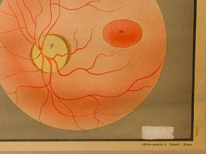 Art Deco Framed Vintage Italian Teaching Chart of the Eye in French, circa 1940 For Sale