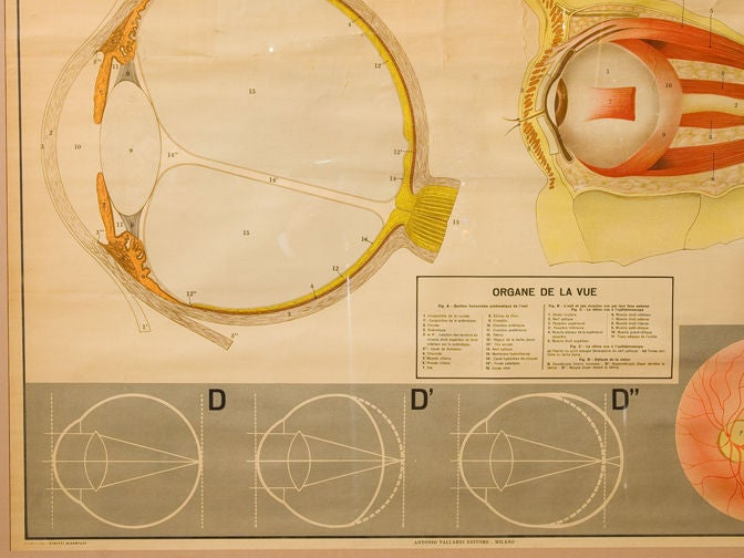 Glass Framed Vintage Italian Teaching Chart of the Eye in French, circa 1940 For Sale