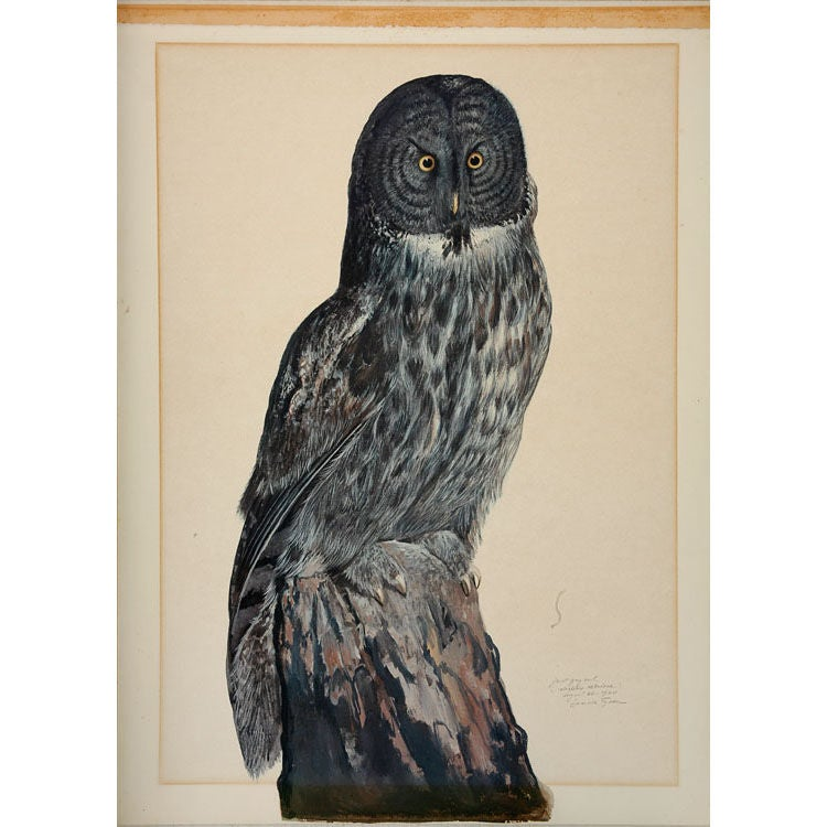 Great Grey Owl Lithograph For Sale