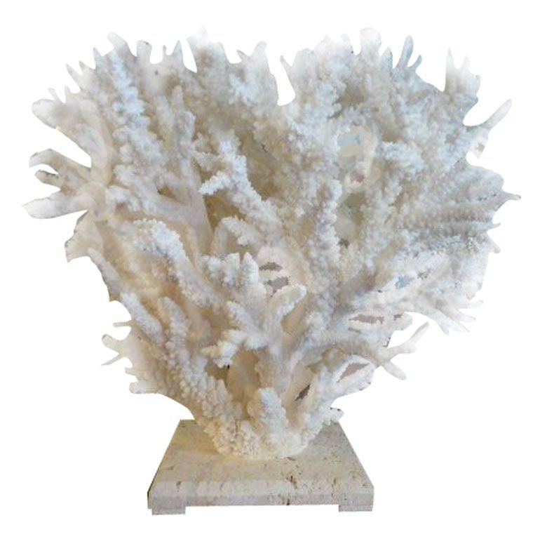 Large and decorative white branch coral centerpiece at stdibs