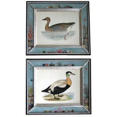 Marvelous set of Ten Hand Colored Engravings of Water Fowl
