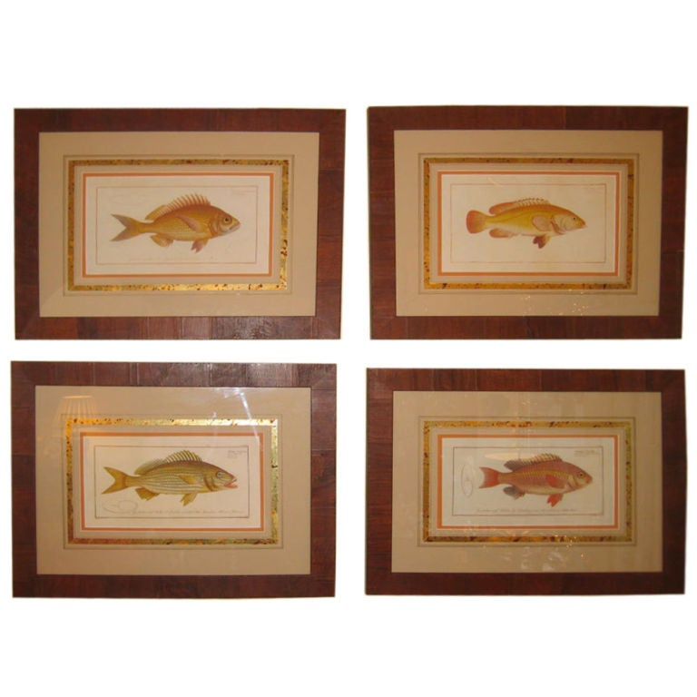 Set of Four 18th Century Dutch Fish Engravings