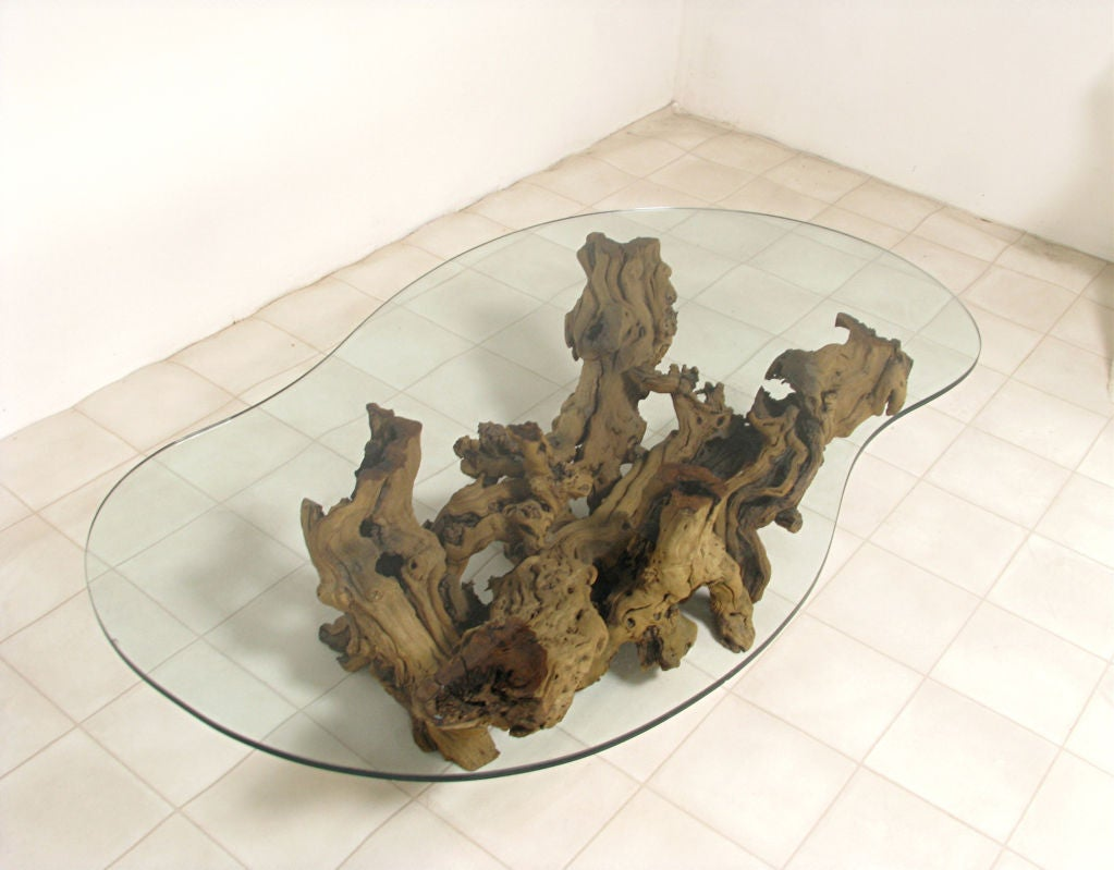 Biomorphic Coffee Table Modernist Driftwood Coffee Table With Biomorphic Plate Glass Top