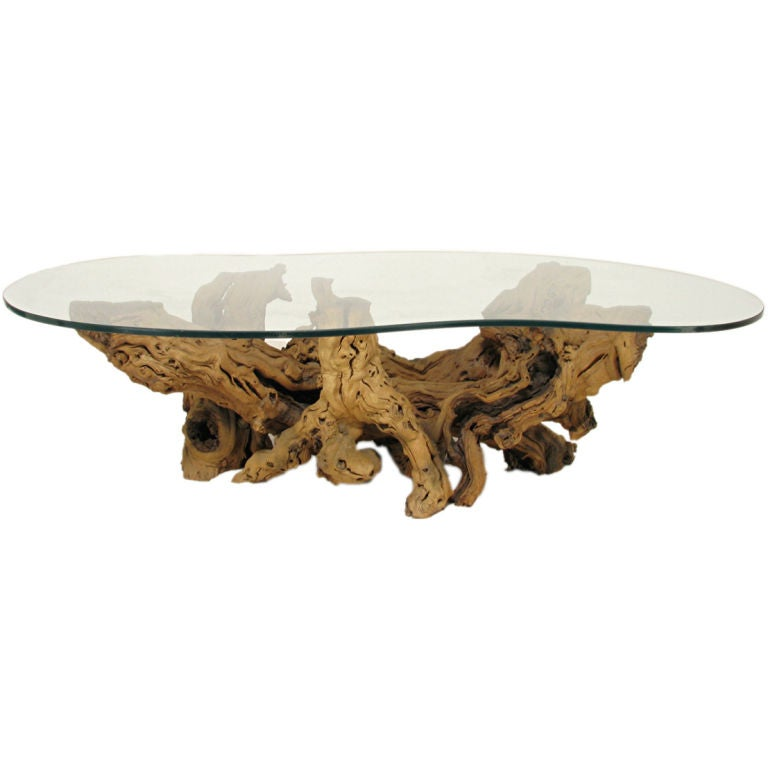 Driftwood Coffee Table With Rectangular Glass Top: Modernist Driftwood Coffee Table With Biomorphic Plate