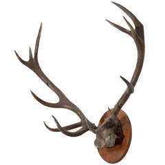 Deer Antlers Mounted to Oval Plaque