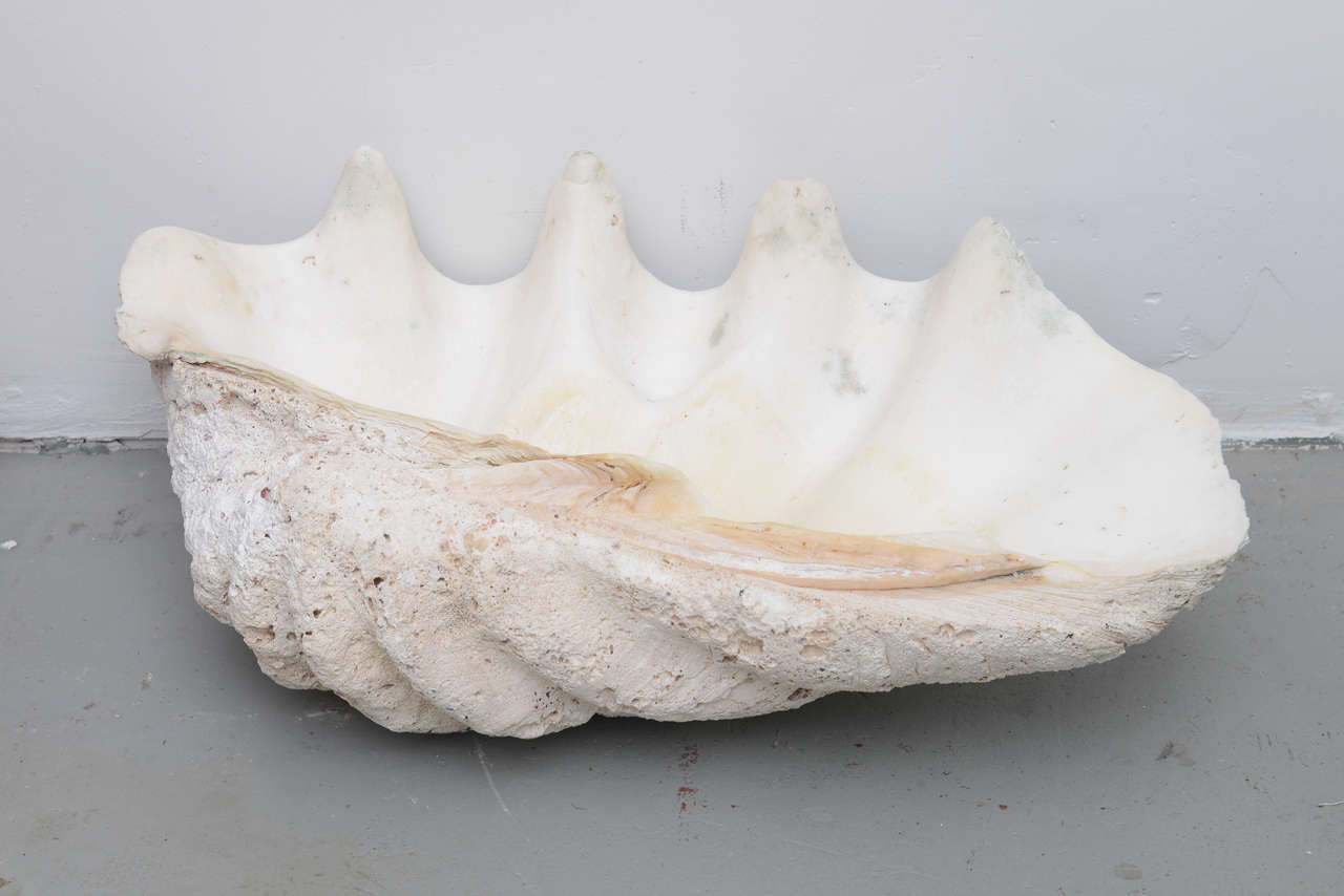 These shells are available as a pair or individually.  As a pair, they are $3000, individually, they are $1200 for the slightly smaller shell and $1800 for the slightly larger one.