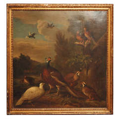 17th Century Oil on Canvas of Pheasants, dove and quail