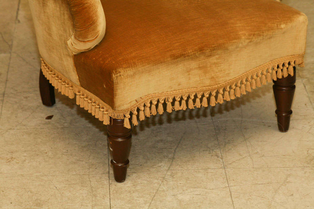 Late Victorian upholstered and tufted armchair, with turned front legs, curved back legs, covered in gold velveteen.