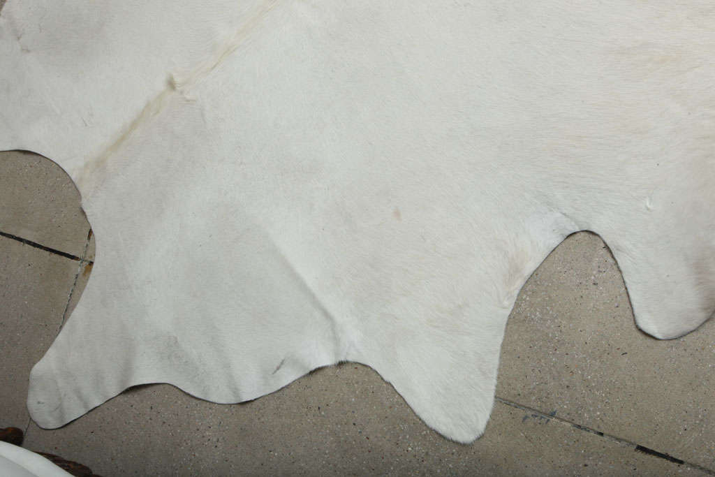 Rare All Natural White Cowhide Rug 3