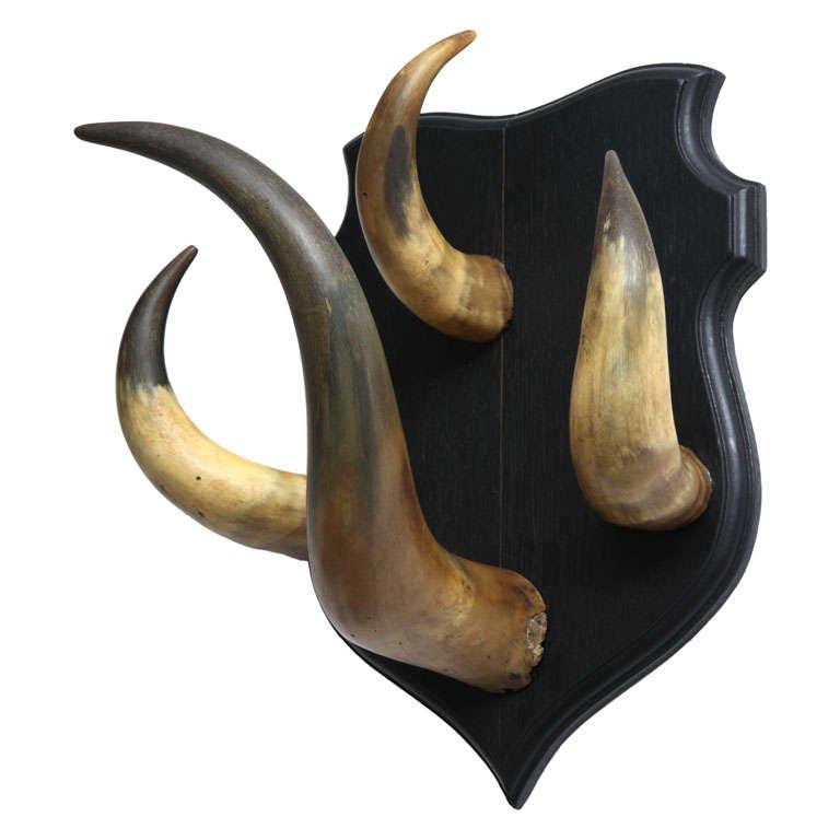 Vintage Horn Trophy Coat Hook