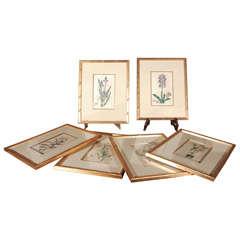 18th c. Framed Botanicals