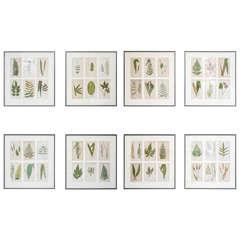 Set of 12 Framed Botanicals