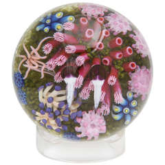 Cathy Richardson East Pacific Pink Anemone Paperweight