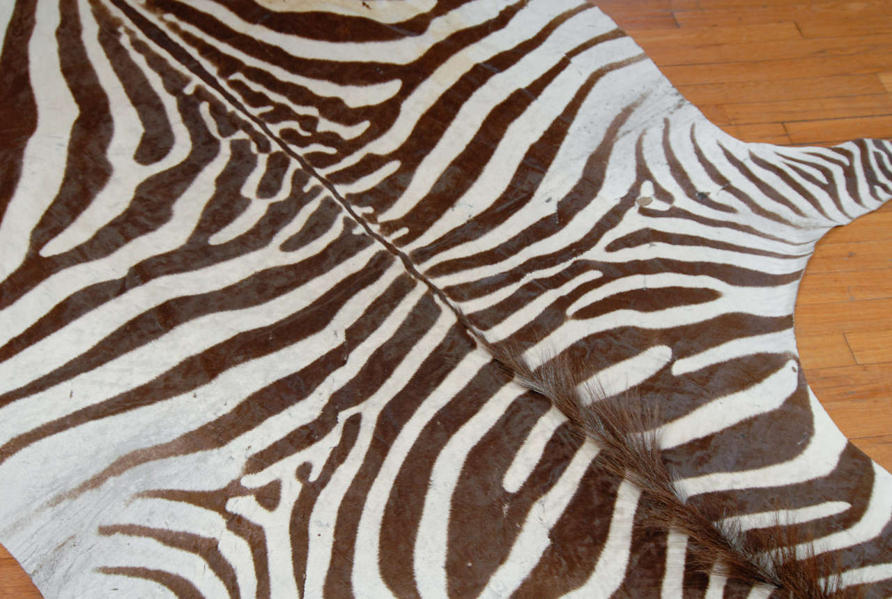 Brown And White Zebra Hide At 1stdibs