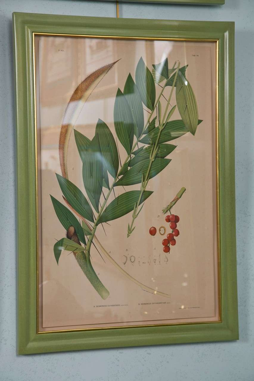 A set of 12 chromolithographs of Brazilian palms by Joao Rodrigues. Beautifully framed. $2,980 Per Pair.