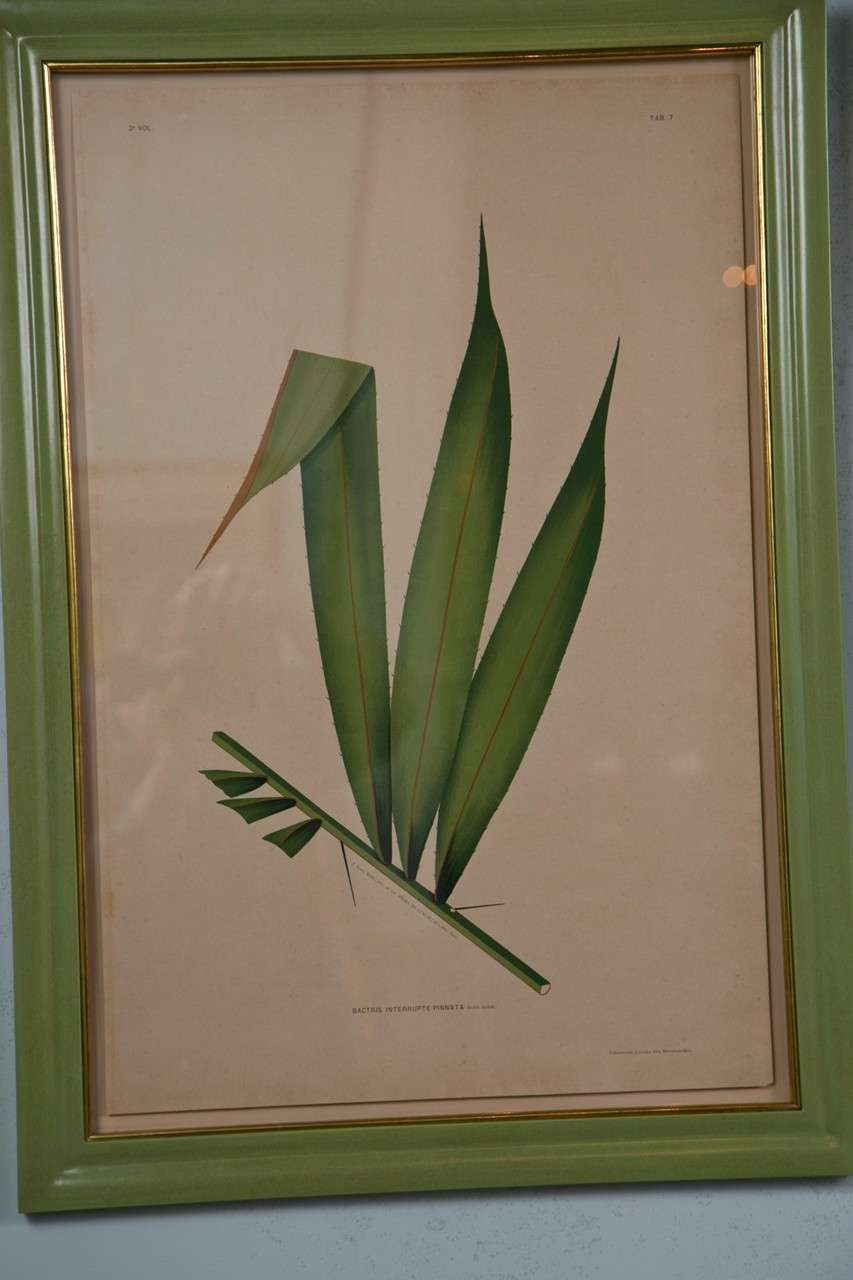 Images Of Brazilian Palms by Joao Rodrigues In Excellent Condition For Sale In Stamford, CT