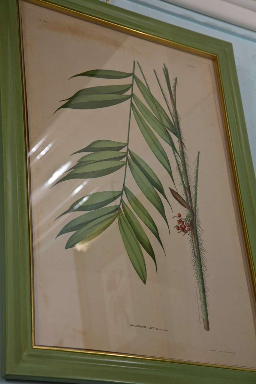 Images Of Brazilian Palms by Joao Rodrigues For Sale 2
