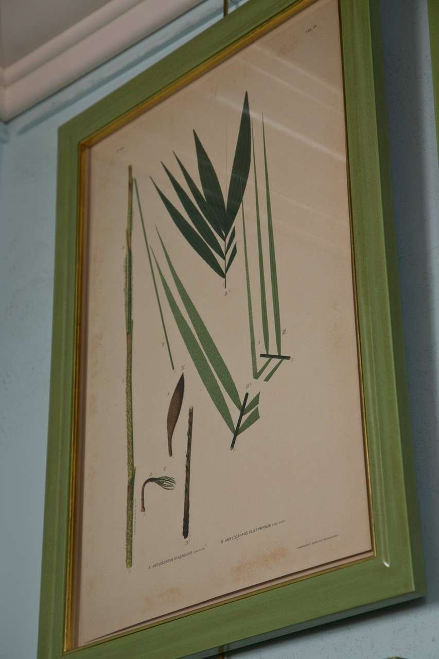 Images Of Brazilian Palms by Joao Rodrigues For Sale 4