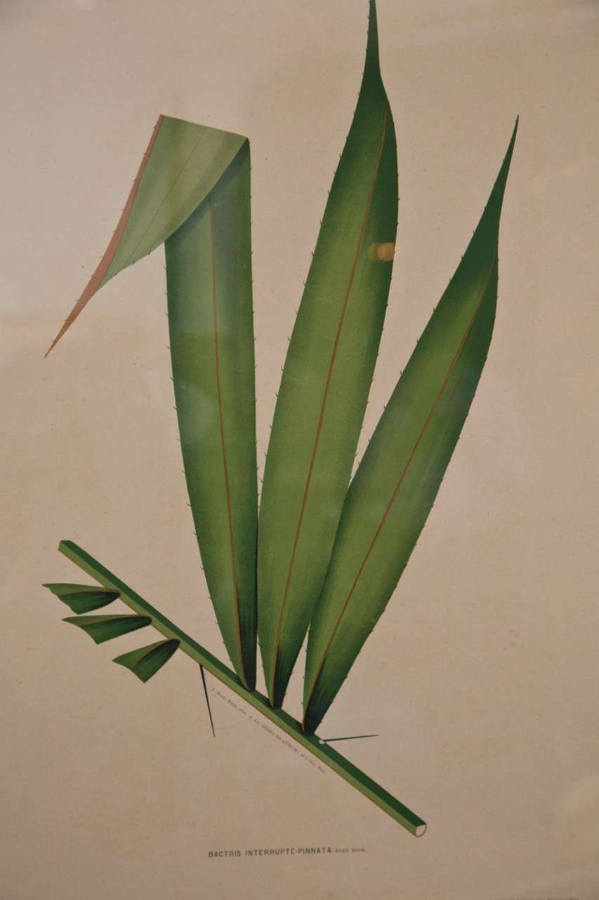 Images Of Brazilian Palms by Joao Rodrigues For Sale 5