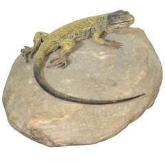 Austrian Bronze Lizard by, Franz Bergman