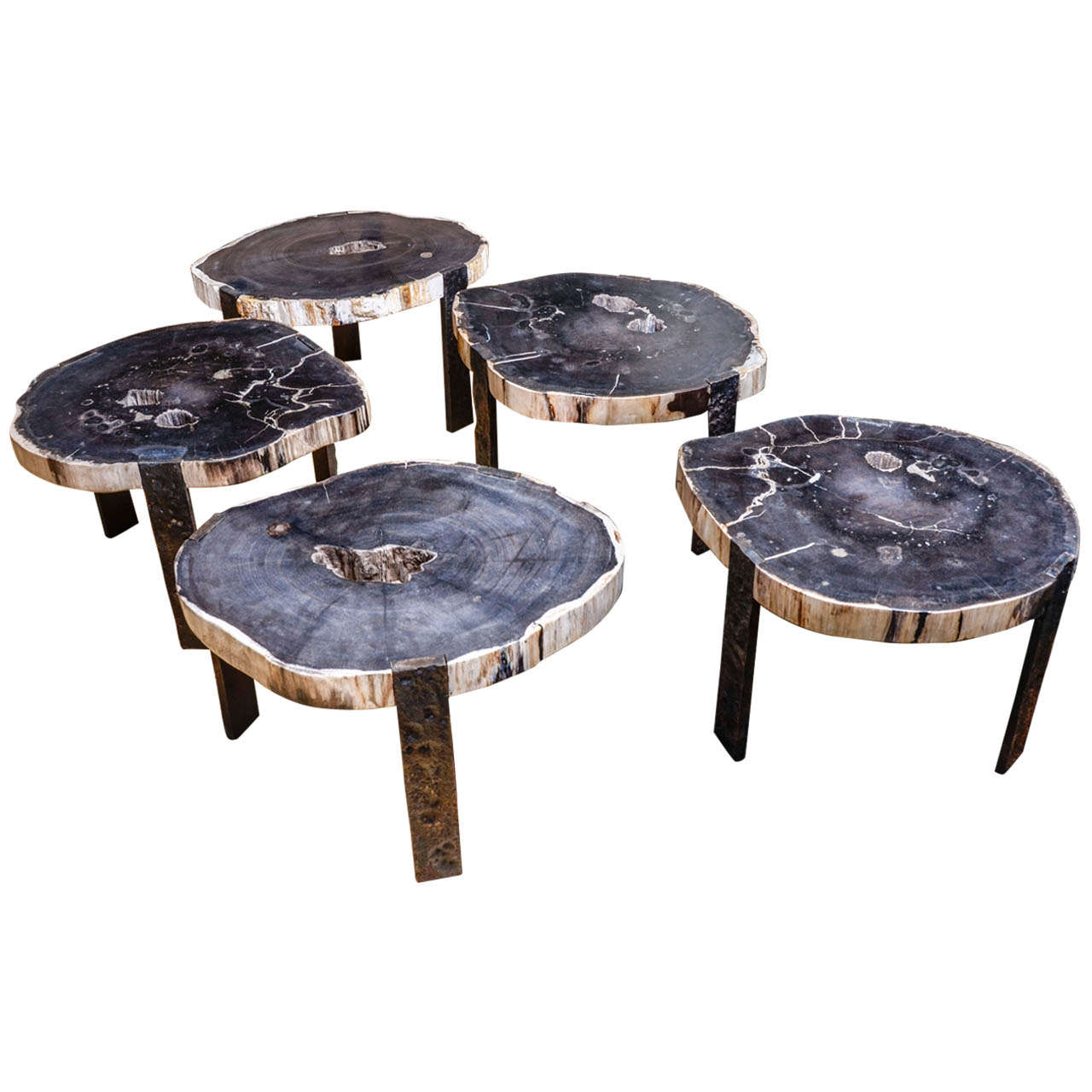 Oval Coffee Tables With Petrified Wood Top And Tripod Iron Base At 1stdibs