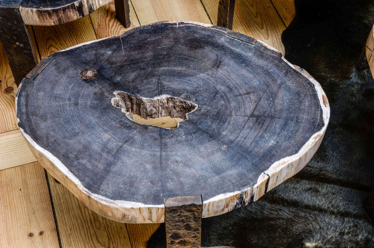 DSC5832 Petrified Wood Coffee Table Oval Coffee Table With Petrified Wood Top At Stdibs
