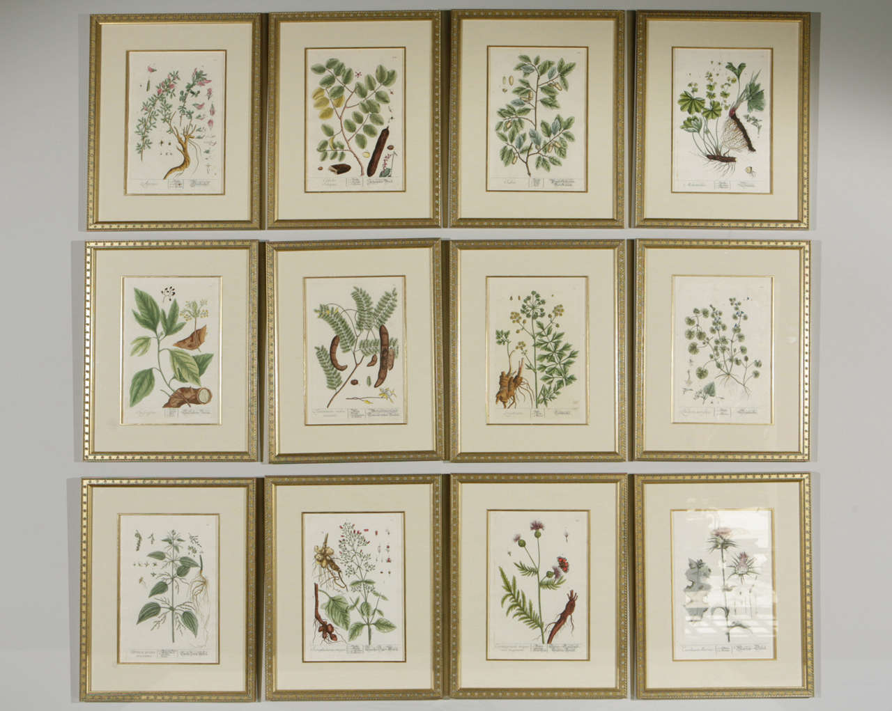 Awesome Botanical Framed Art Photos - Picture Frame Ideas ...