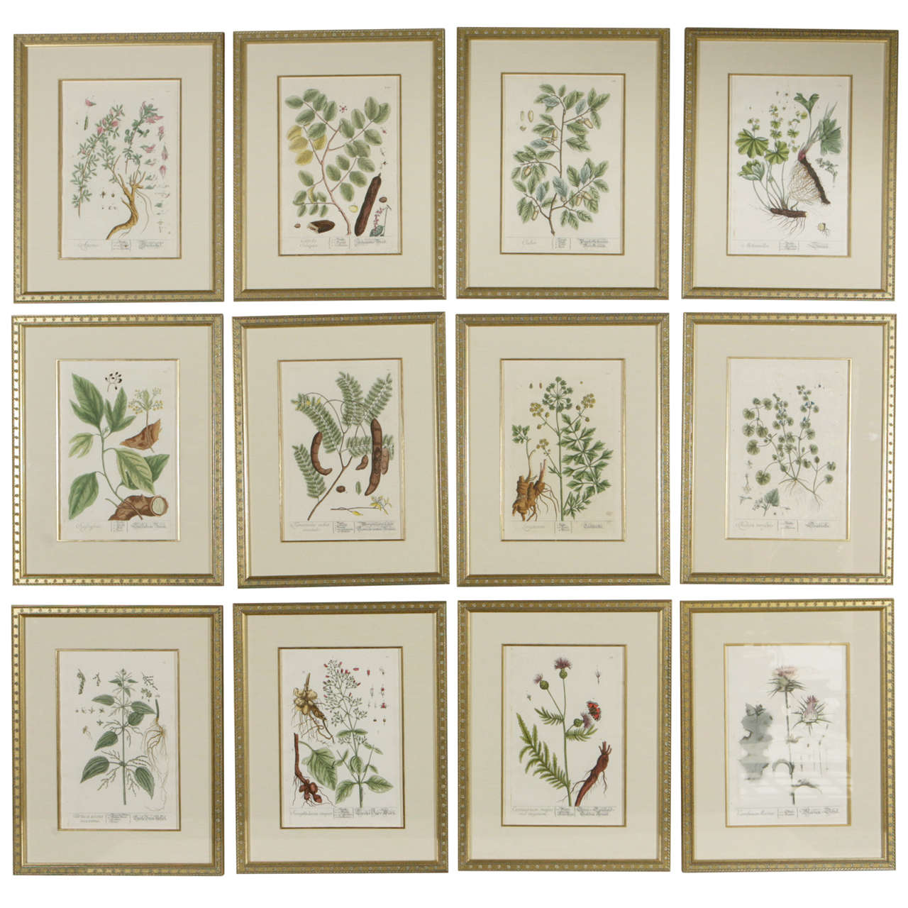 18th century framed botanical prints for sale at 1stdibs