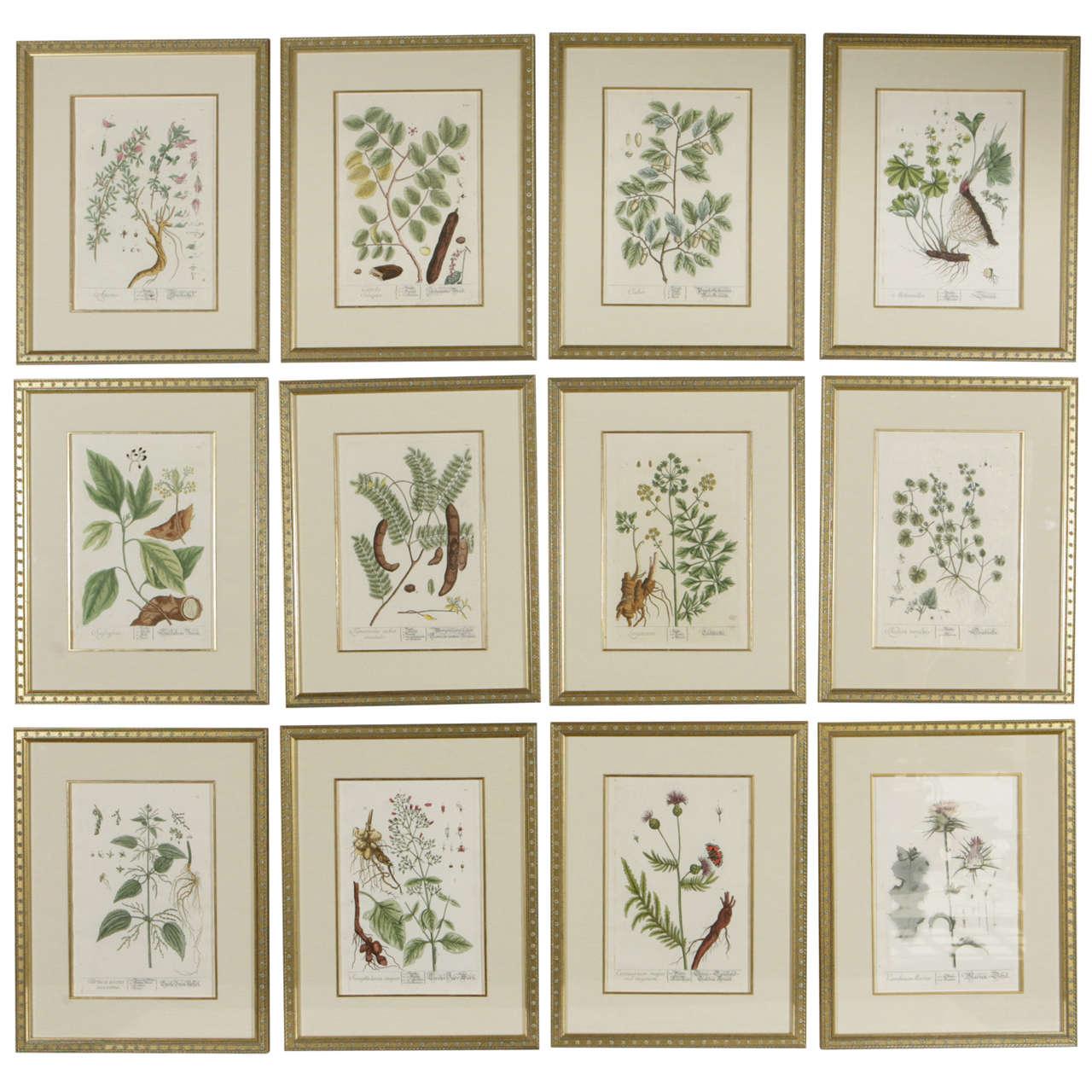 18th century framed botanical prints for sale at 1stdibs for Framed photos for sale