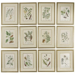 18th Century Framed Botanical Prints