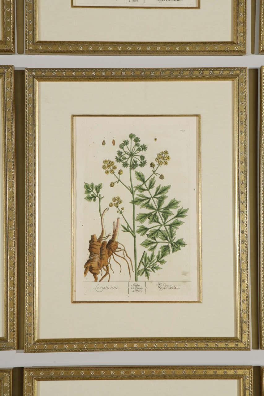 18th Century Framed Botanical Prints For Sale at 1stdibs